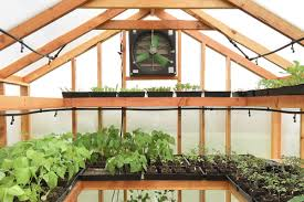 inside greenhouse ideas best of both worlds all you need to know about greenhouse grows