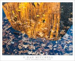 sierra nevada fall color
