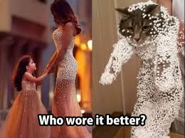 Who Wore It Better Meme - so who really wore it better cute animals cats humor memes com