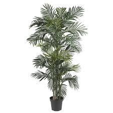 100 palm tree home decor home decor plants trees tags home