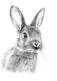25 rabbit drawing ideas rabbit illustration