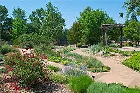 water efficient plants sacramento mgs