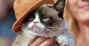 Grumpy Cat Has Died Youtube - paid pets the internet s most famous animals