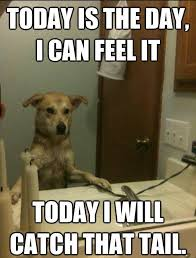 Thursday Funny Memes - 11 national dog day memes that are just as hilarious as they are cute