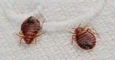 What Kills Bed Bugs Naturally Home Remedies To Get Rid Of Bed Bugs Naturally Baking Soda