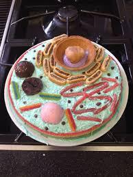 edible animal cell cake ideas 31065 edible cell cell cake