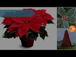 Christmas Plants Christmas Plants Xmas Lights Youtube