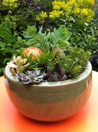 Indoor Garden Containers - 81 best succulents in containers images on pinterest succulents