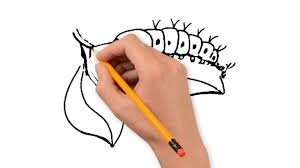 insects animals pencil to draw step by step youtube