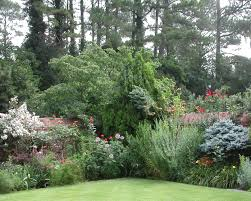choosing bushes trees shrubs for landscaping tree planting