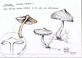 31 best sketch images on pinterest mushrooms sketching and mushroom