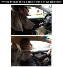 Funny Memes About Driving - dog meme driving