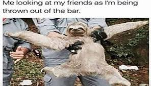 Sloth Meme Images - i can has cheezburger sloth memes funny animals online