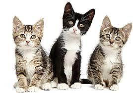 Blind Cat Sanctuary Furry Tales Cat Rescue