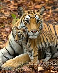 safari nursery decor baby tiger and mom photo print mom and