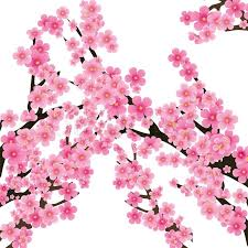 cherry blossom flowers of tree branch background