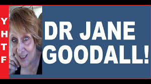 dr jane goodall short biographical sketch anthropologist global ww