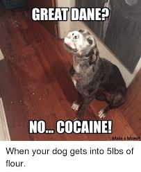 Great Dane Meme - great dane no cocaine make a meme funny meme on me me