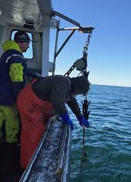 cape cod bay fishing gear removal underway