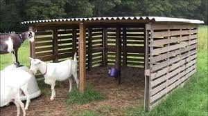our goat shelter using free pallets youtube