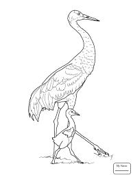 coloring pages crane cranes birds colorpages7 com