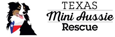 south texas australian shepherd rescue available mini aussies texas mini aussie rescue