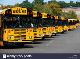 yellow buses cape cod usa stock photo royalty free image
