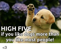 High Dog Meme - 25 best memes about you like dogs you like dogs memes
