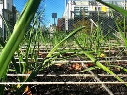 last year thanksgiving david baker architects acta non verba youth urban farm project