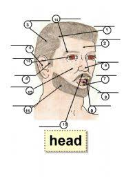 head body parts human body flashcard 1 part 5 ear 9 tooth