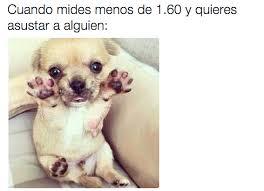 Memes De Chihuahua - disfrutamos de libertades que nadie más tiene memes humor and meme