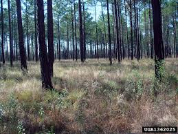 100 pdf invasive forest insects introduced forest trees and