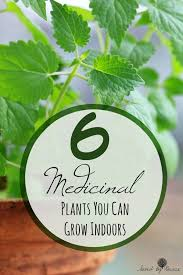 Plants To Grow Indoors 6 Medicinal Plants You Can Grow Indoors