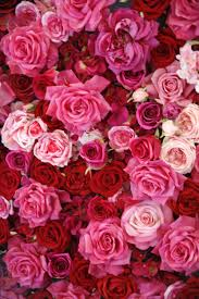 Valentine Flowers 14 Rose Color Meanings What Do The Colors Of Roses Mean For