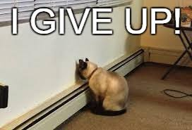 I Give Up Meme - give up cat imgflip