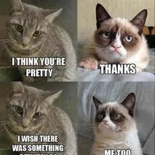 Mean Cat Memes - grumpy cat y u so mean by urbansparkman meme center