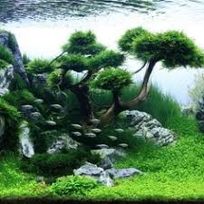 Java Moss Aquascape Planted Aquariums Always Look The Coolest Especially With Tetras