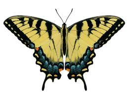 butterfly color decals eastern tiger swallowtail