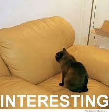 Interesting Memes - interesting cat weknowmemes