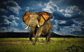elephant with butterfly photo manipulaion imgur