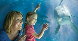 seaworld black friday deals seaworld free unlimited admission fun card 2 free tickets for