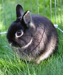 rabbit rabbit 10 critical facts about caring for netherland rabbits
