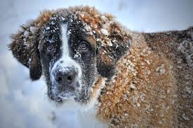 best dog breeds for cold weather canna pet