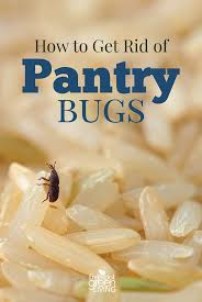 Kitchen Cabinet Bugs How To Get Rid Of Pantry Bugs Five Spot Green Living