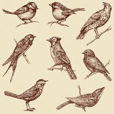 wild birds sketches u2014 stock vector mubaister gmail com 102715680