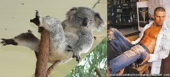 where was channing tatum born koala lumpur album on imgur