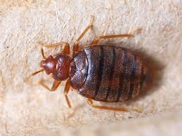 Halting the hitchhikers avoid bringing idaho bed bugs with you