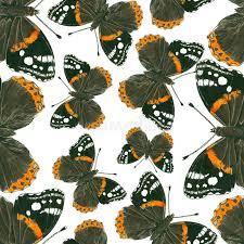 admiral butterfly pattern stock illustration image 95718408