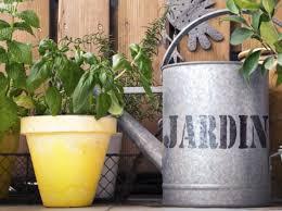 pflanzen f r balkon pflanzen fr balkon mit viel sonne astern gehren zu den with