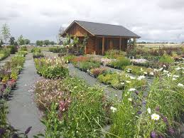 landscaping kennewick wa ace landscaping nursery plants for sale